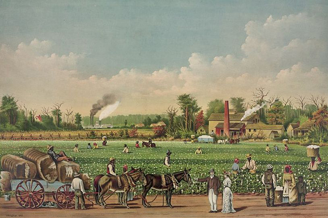 1884 lithograph of a cotton plantation on the Mississippi. Image available via Wikimedia Commons.